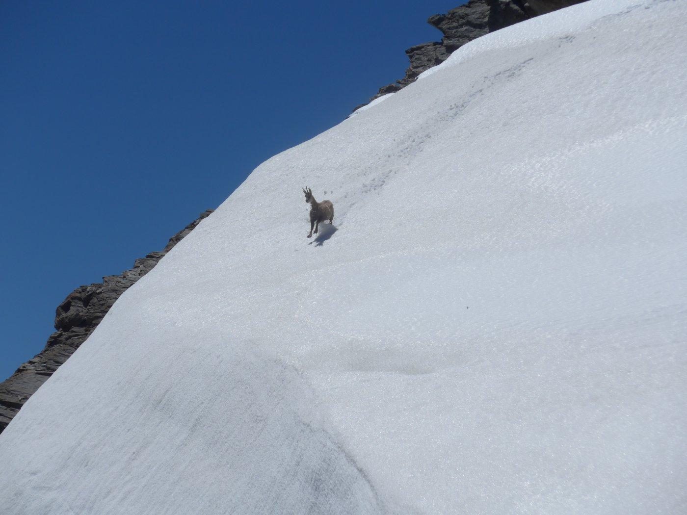 Imbocco vallone del ghiacciaio Aoiulle...lui va tranquillo!