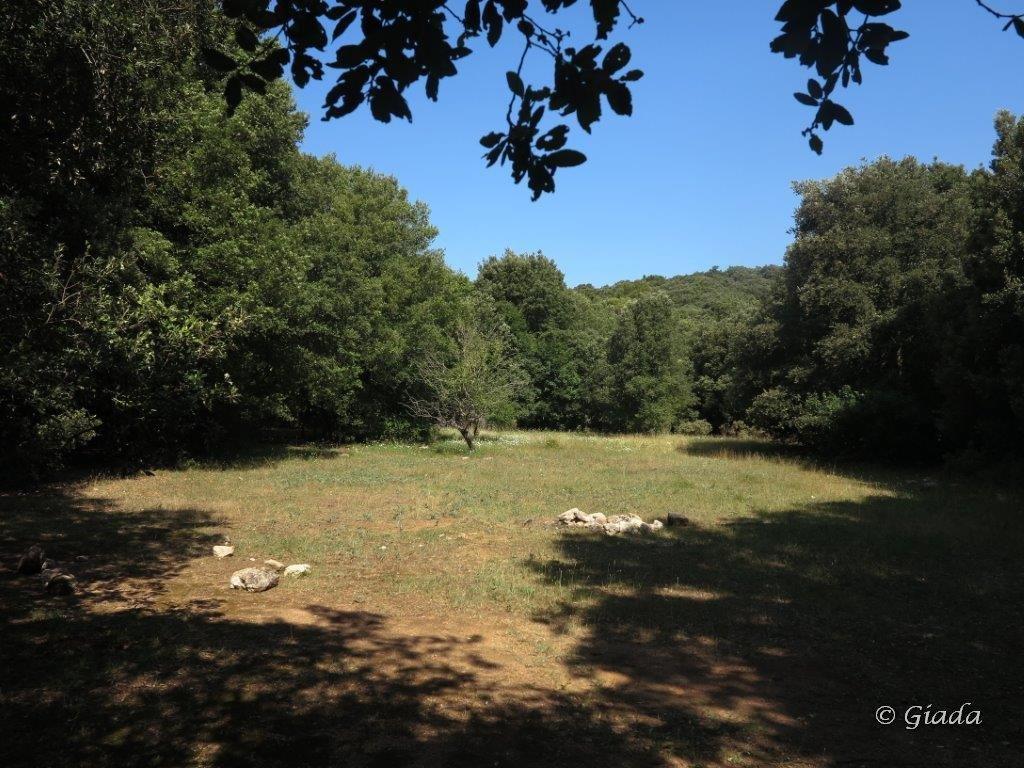 Cucco (Monte) da Calvisio Vecchia, anello Lacremà, Bric Reseghe, Camporotondo 2015-07-09