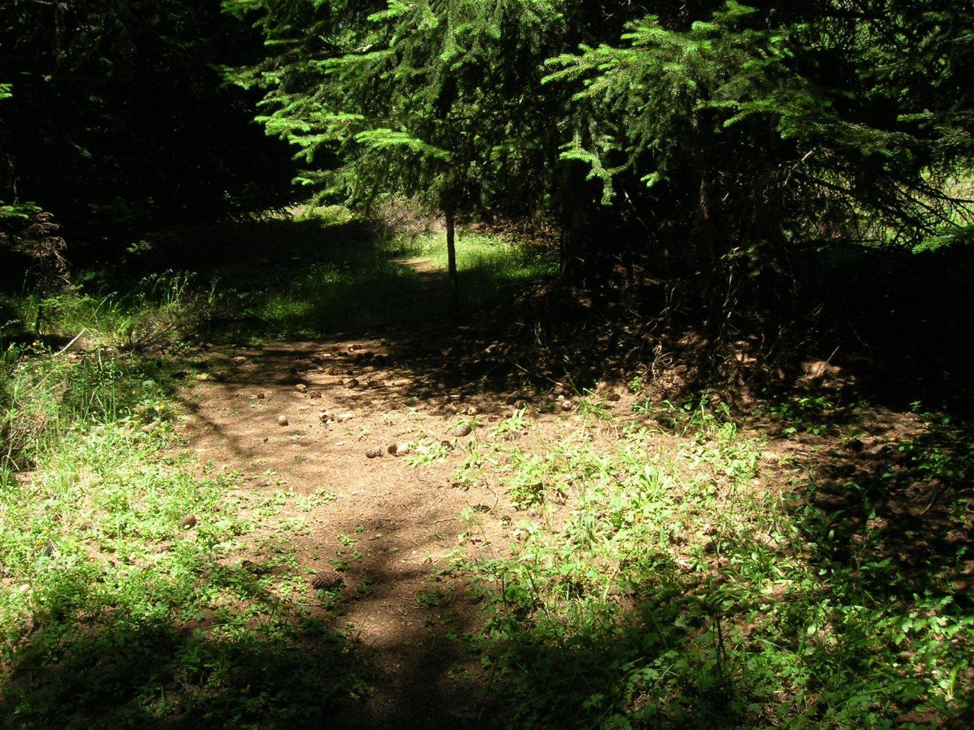 nel bosco finale..