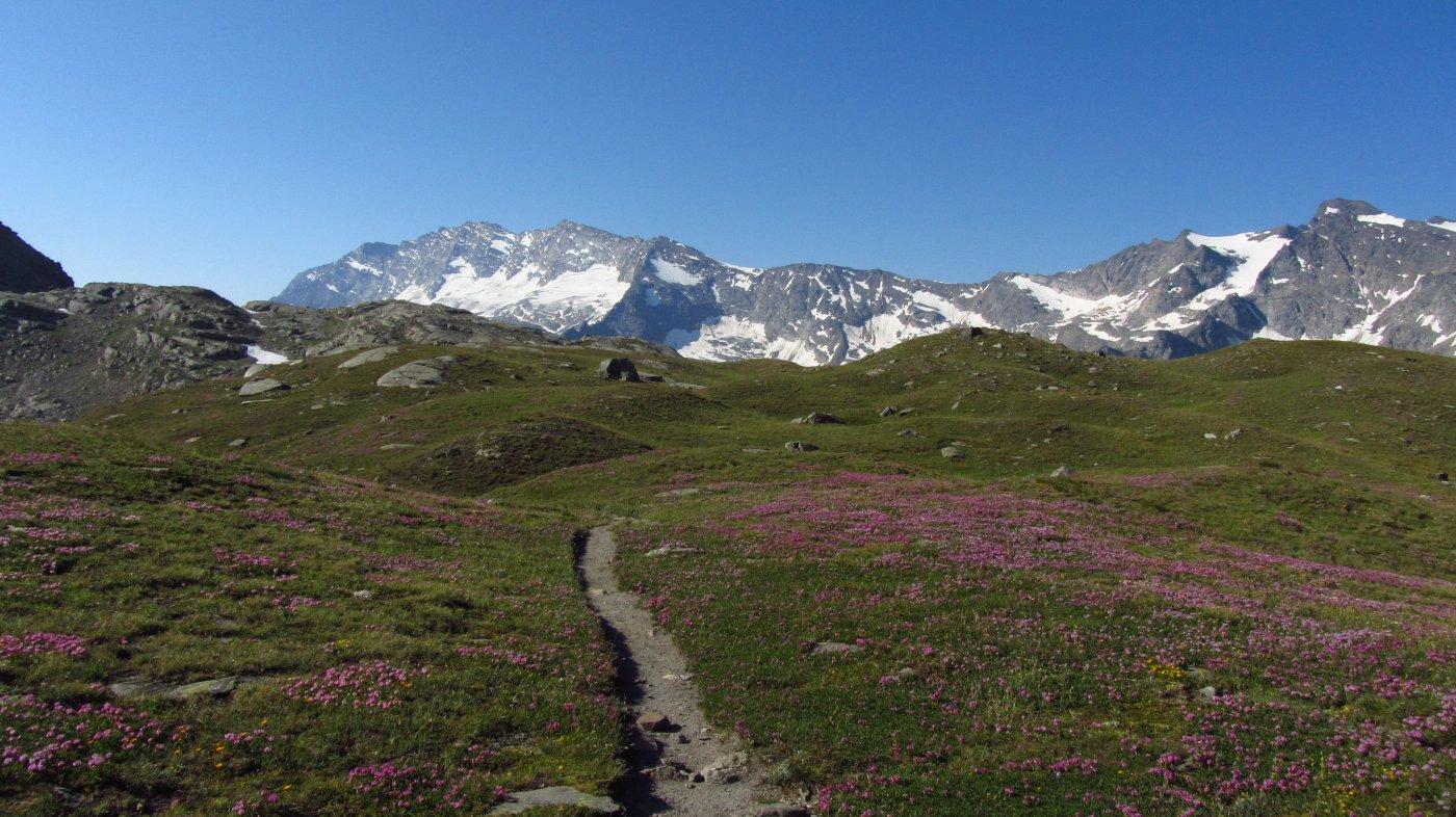 Il sentiero poco oltre i colle del Nivolet si inoltra su una bella fioritura estiva