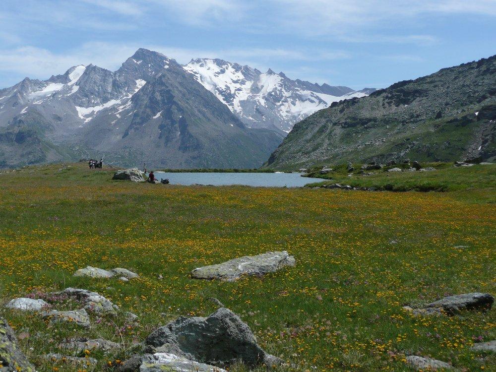 Prati in fiore a quota 2400 m