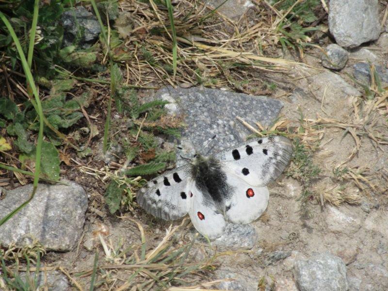Una delle tante farfalle