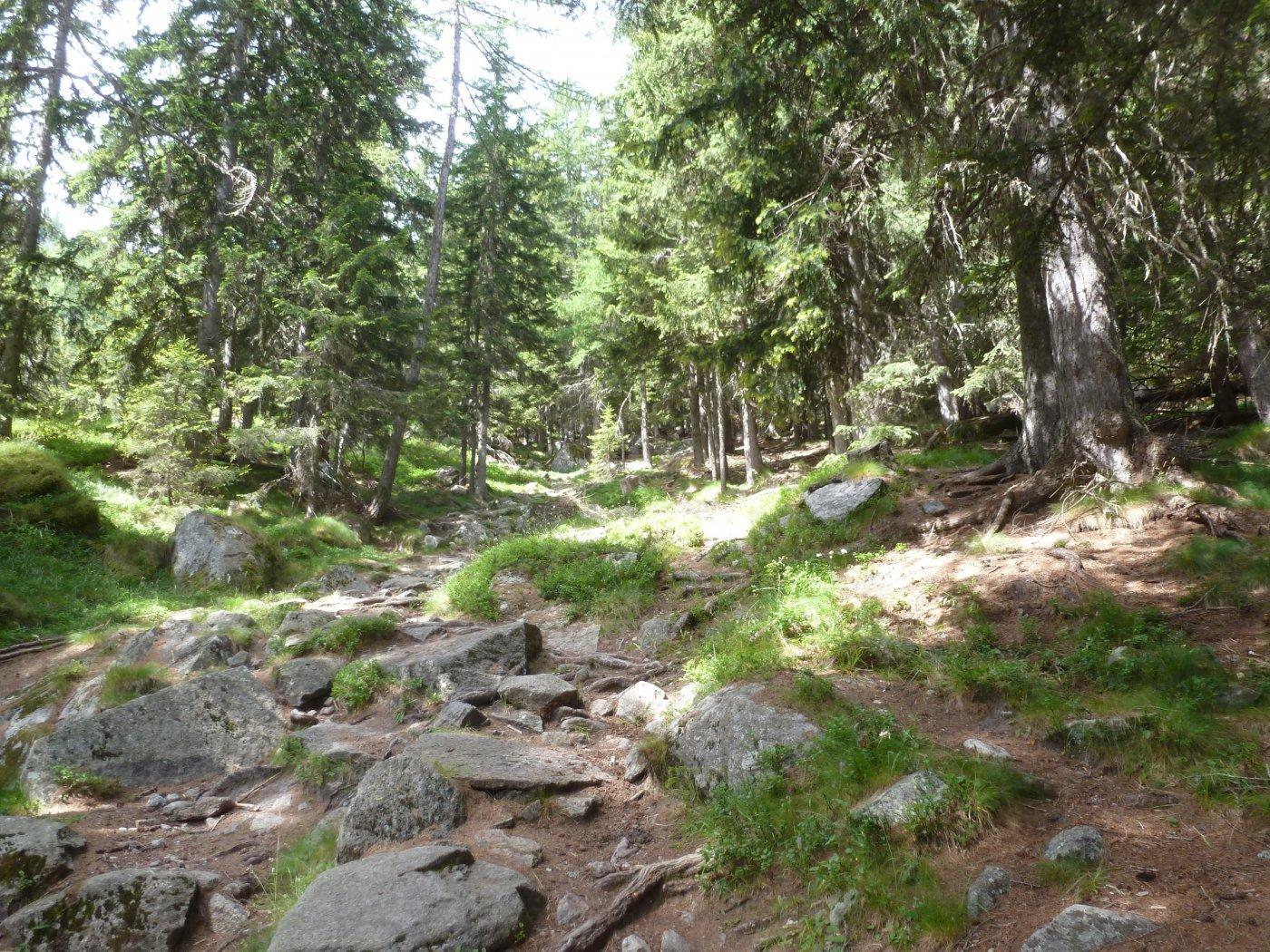 nel bellissimo bosco