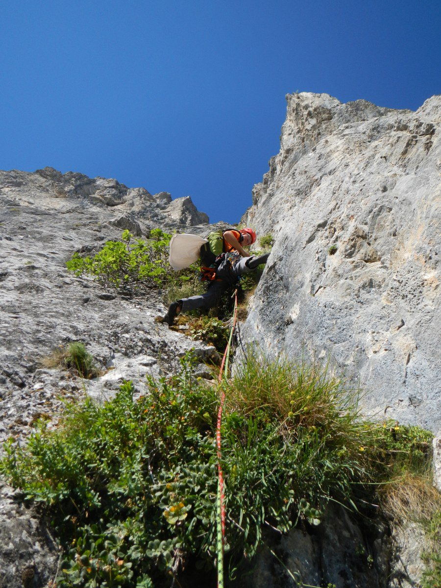 dalla lotta coll'Alpe alla lotta coll'Arbusto