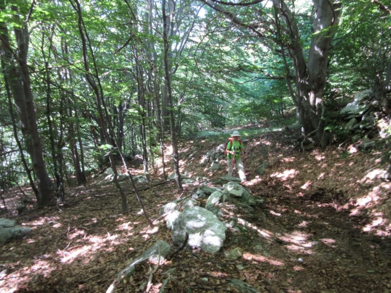 Nel bosco di faggi