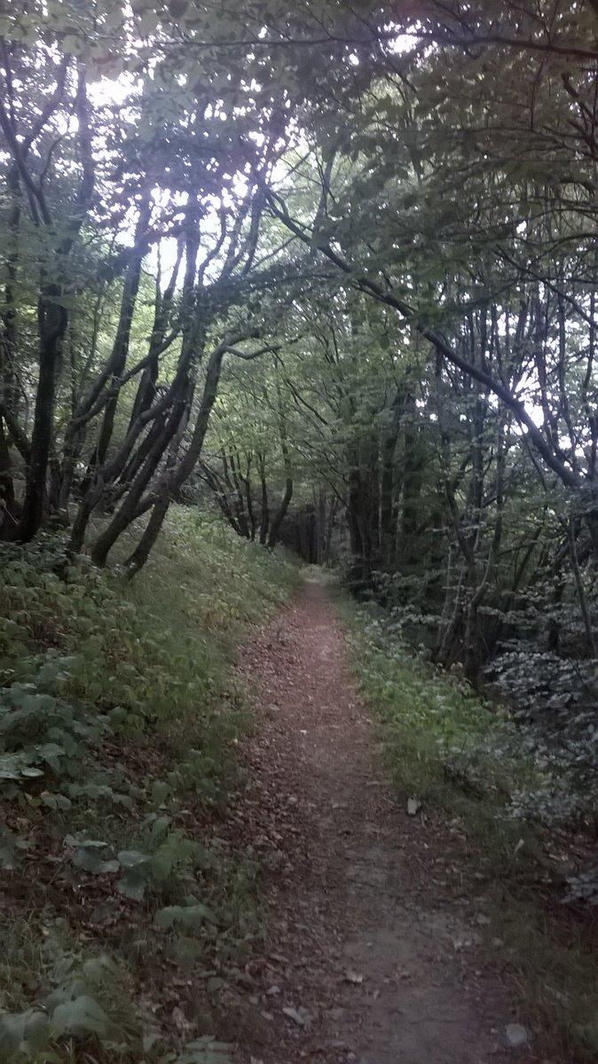 Antola (Monte) da Montoggio , giro con traversata Valle Scrivia-Borbera e ritorno 2015-07-31