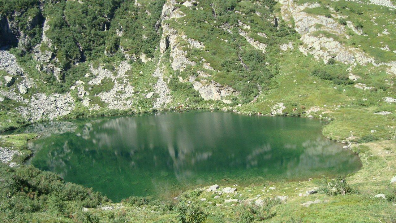 Lago Paschiet e mucche al pascolo