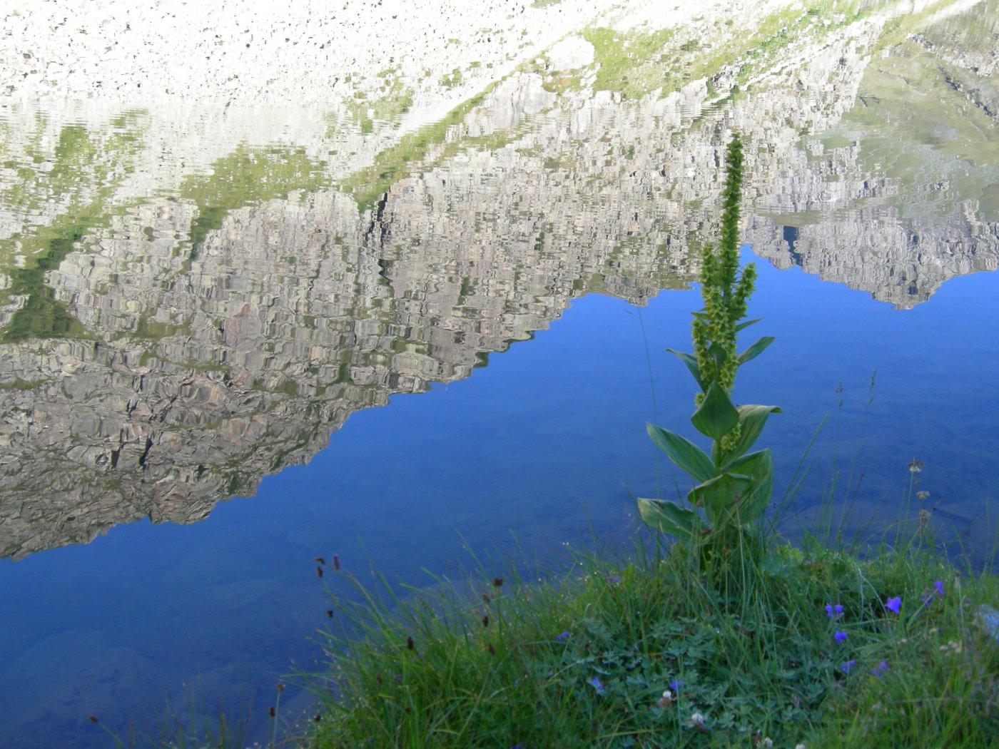 riflessi nel lago Fiorenza (3)