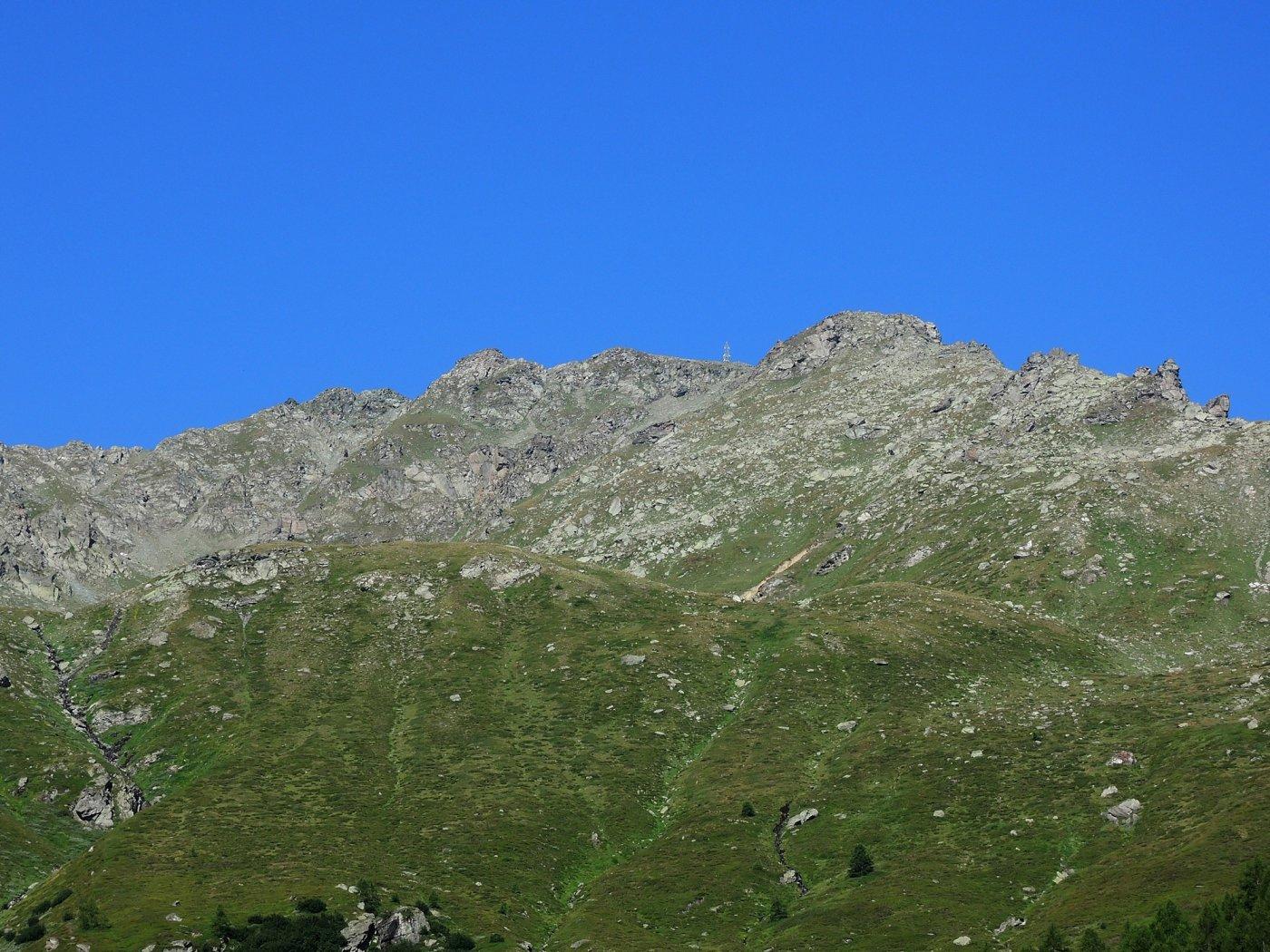 Galehorn in veste estiva