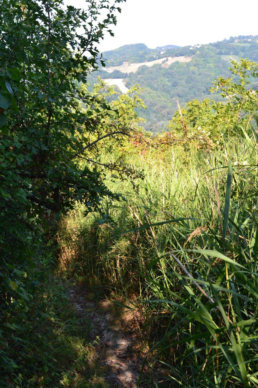 la traccia infrascata che dal santuario scende al Rio Ventena