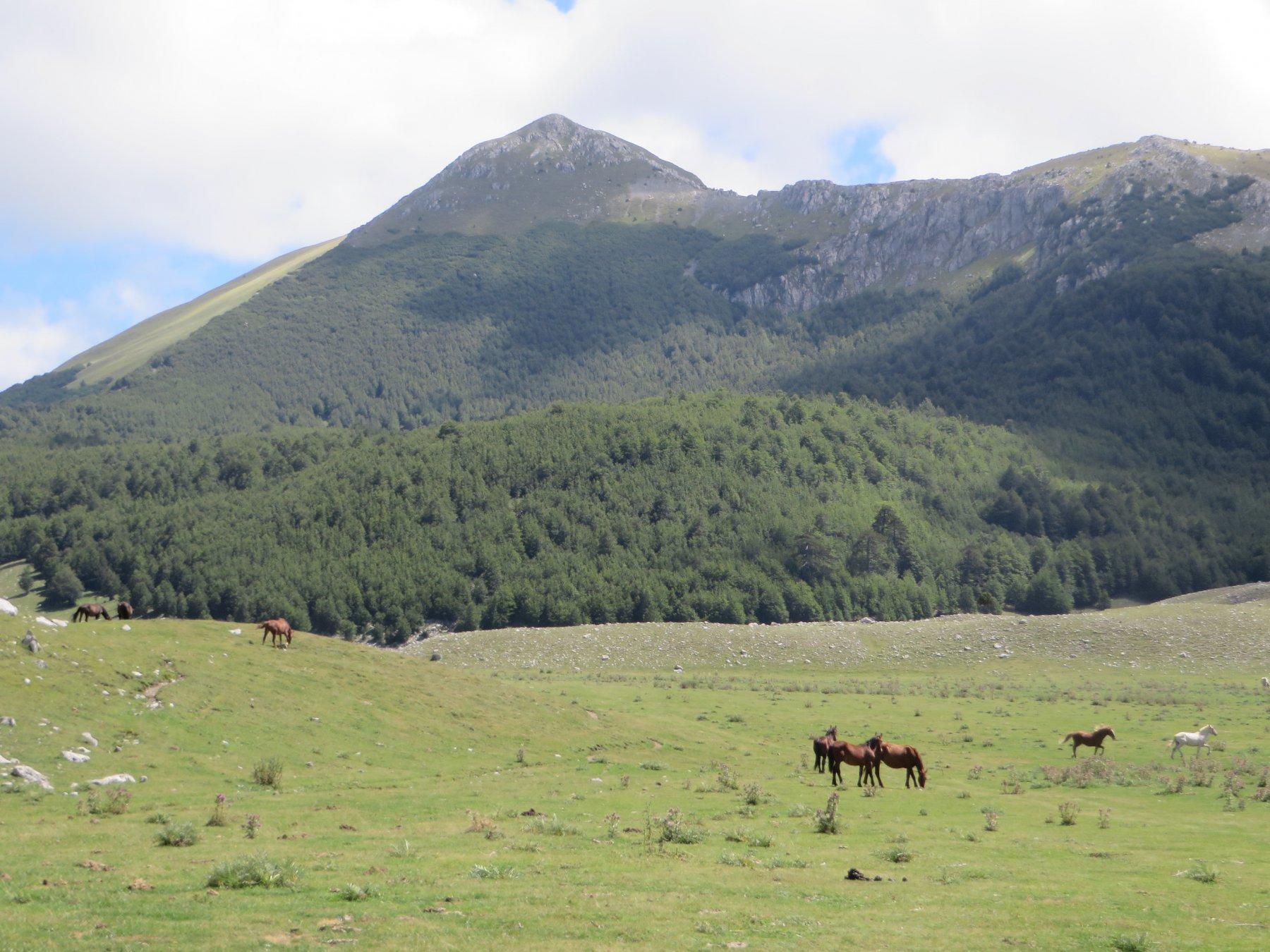 Dolcedorme (Serra) e Monte Pollino dal Colle Impiso 2015-08-17