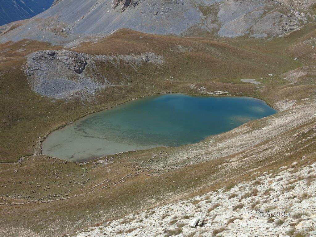 Lac de la Reculaye con le pecore che arrivano a bere