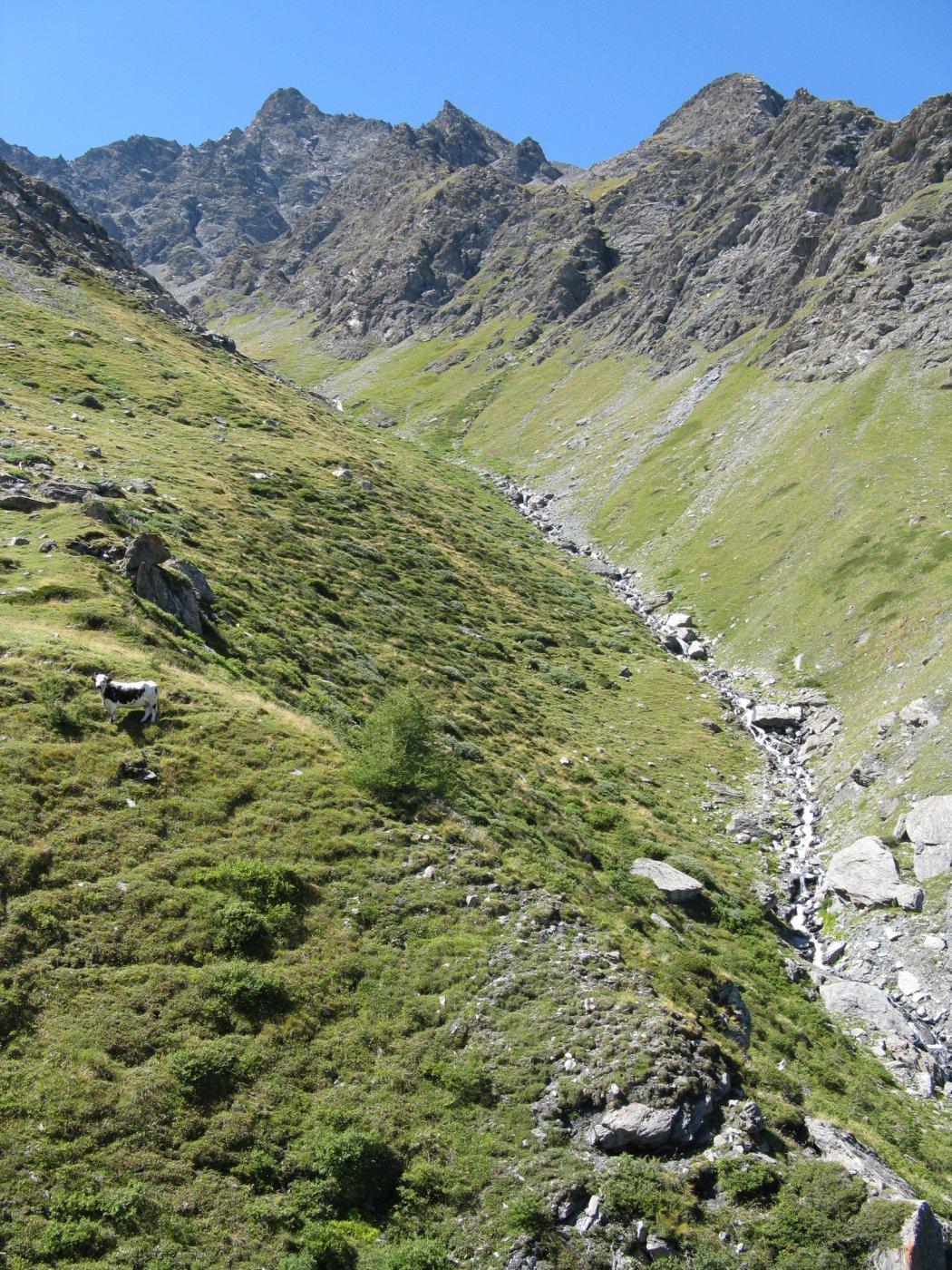 il valloncello di salita verso metà percorso