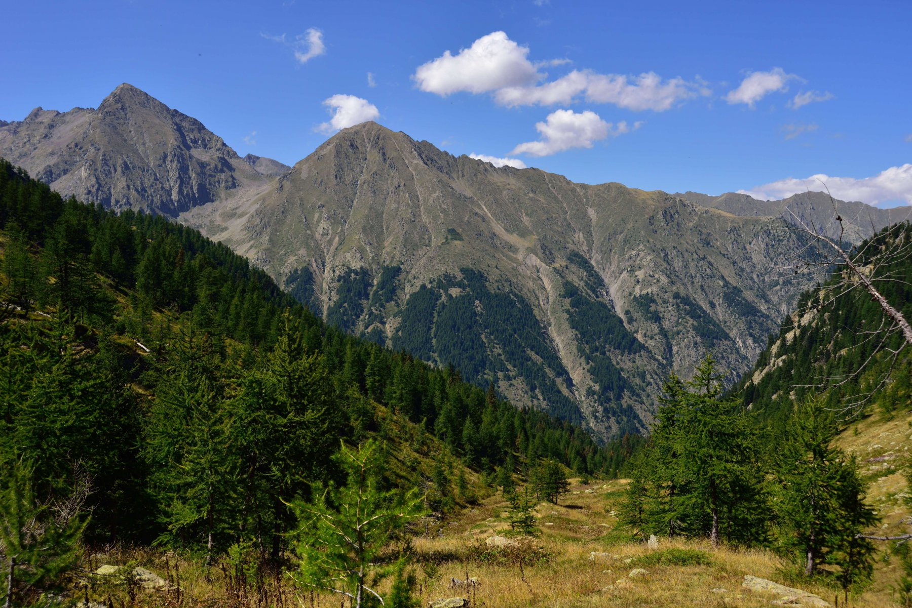 Rognosa della Guercia (Testa) da San Bernolfo, anello per Vallone della Guercia, Passo del Bue, Passo della Sommetta 2015-08-30