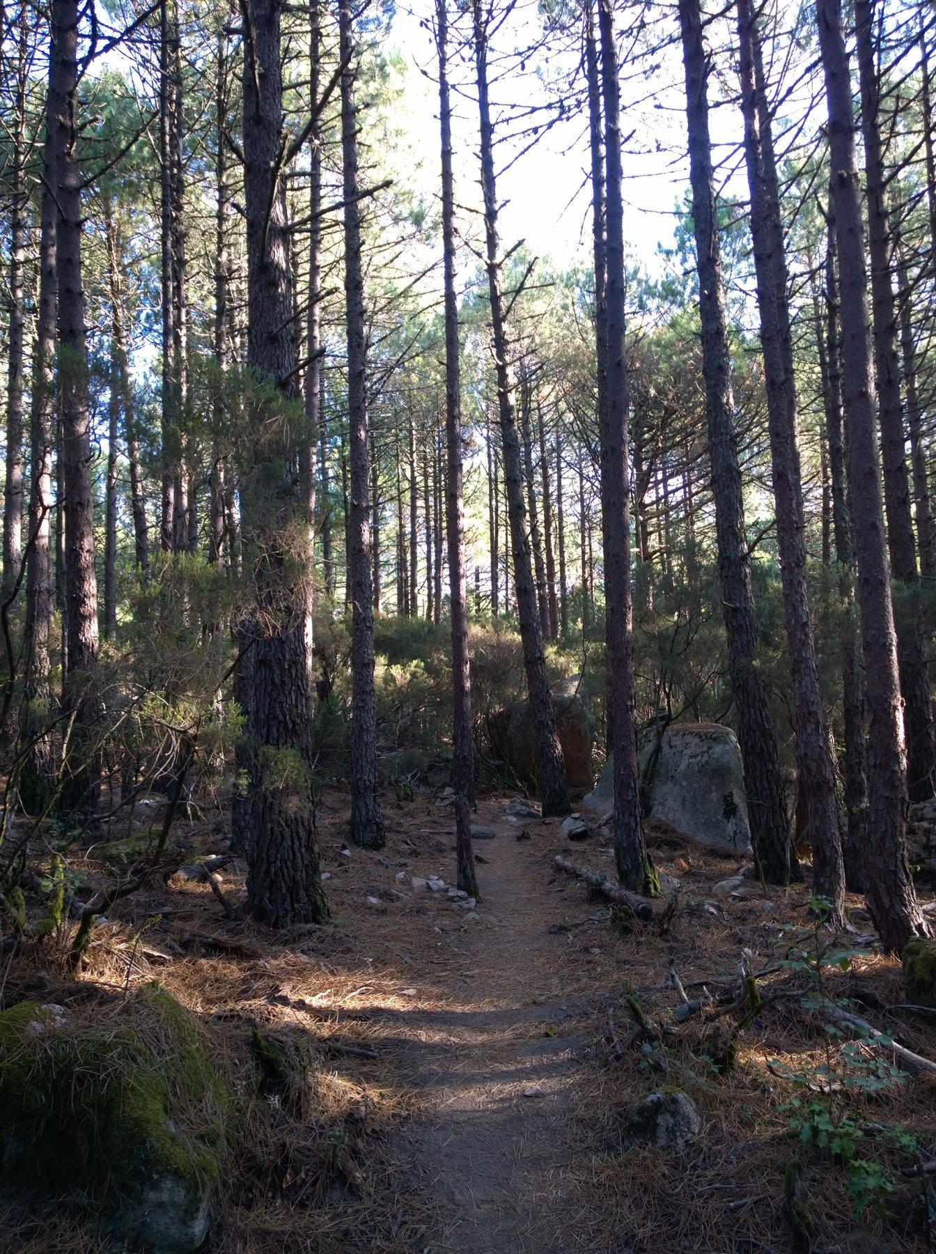 bel bosco