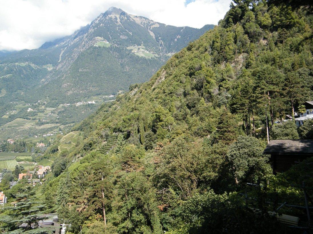 Il boscoso versante meridionale del Kuchelberg attraversato dalla Passeggiata