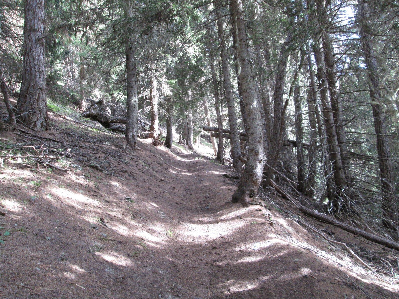 il bellissimo sentiero nel bosco sotto il Col du Bard