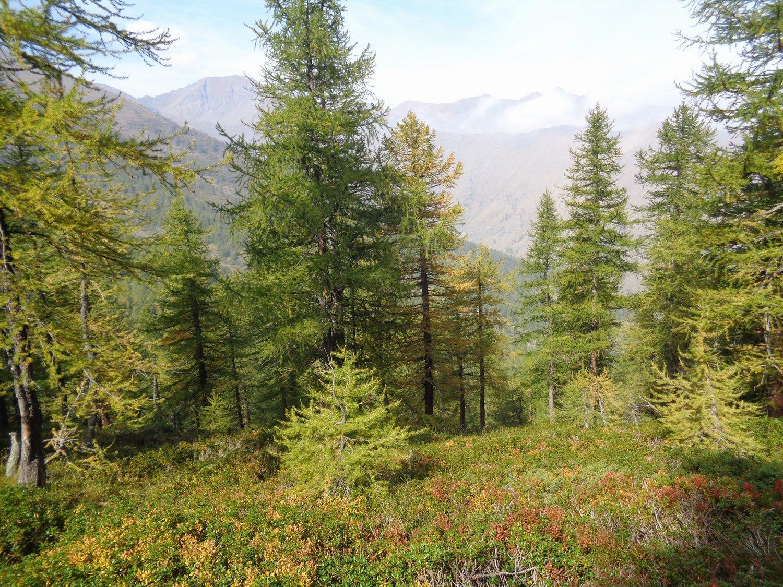 il bosco con i primi timidi colori autunnali