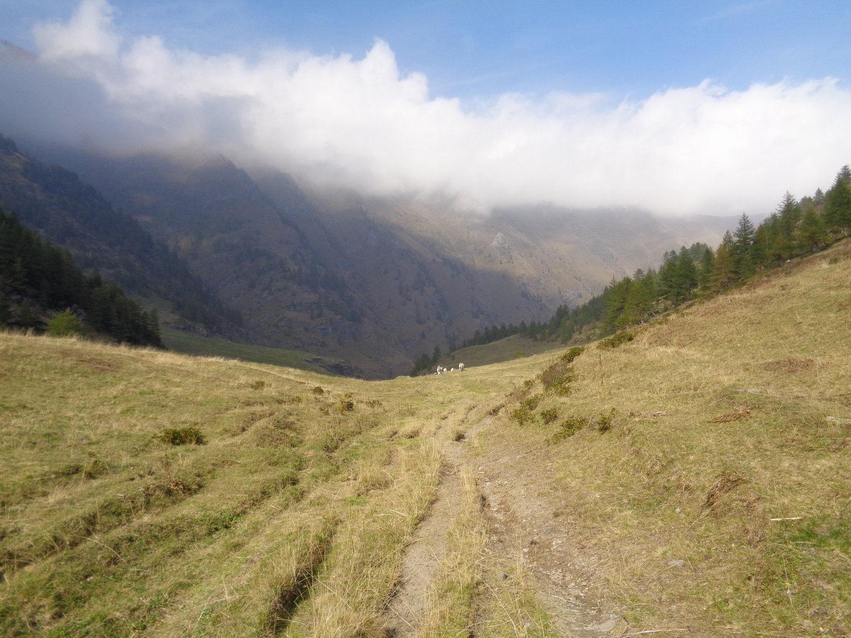 il fondo del vallone del Rio Escafe