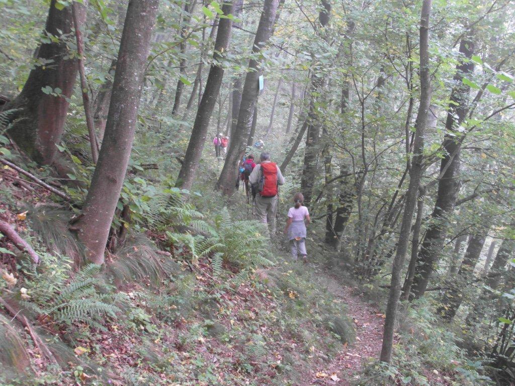 nel bosco verso il Gravio