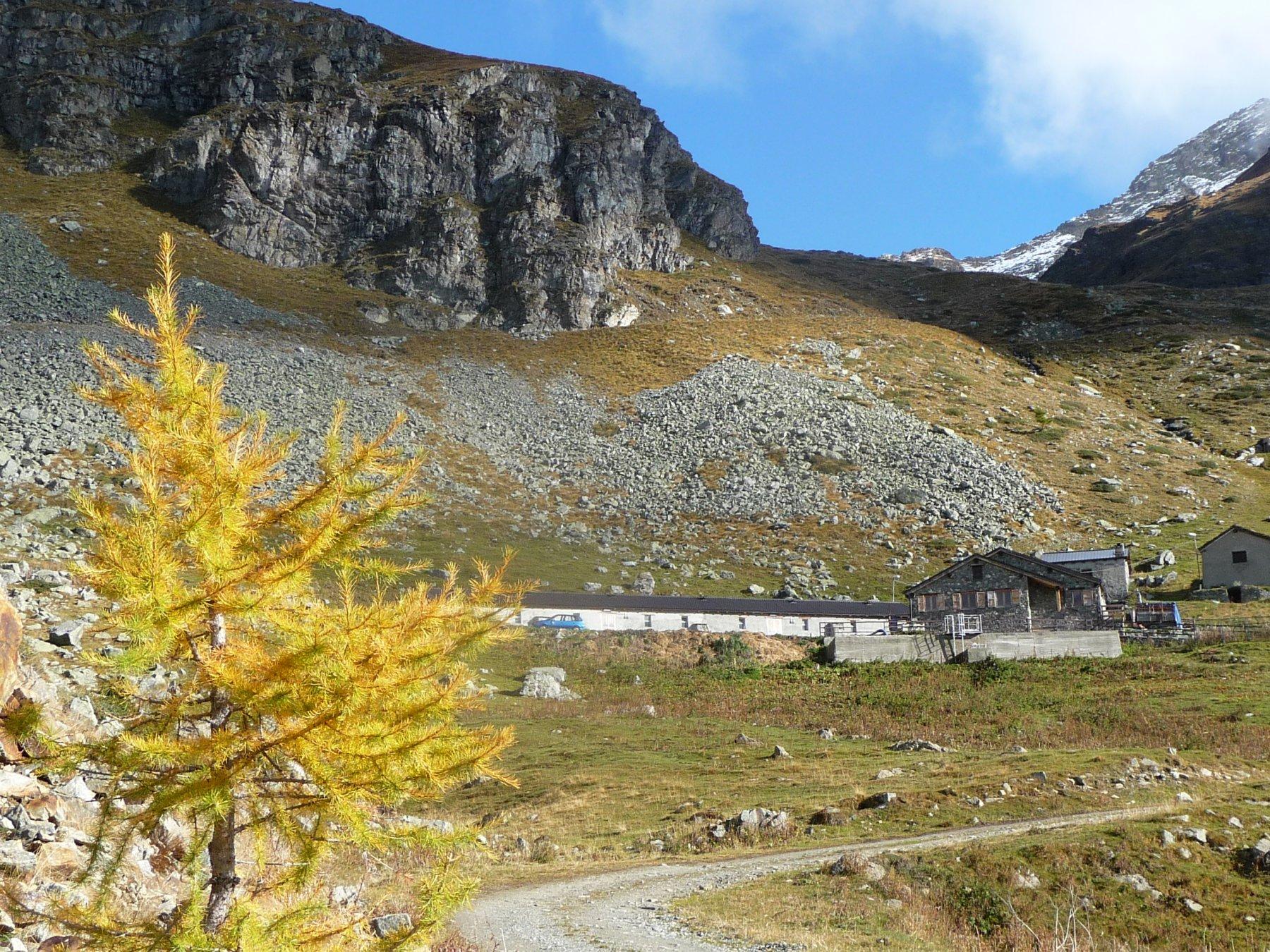 Alpeggio Seyvaz con un larice giallo