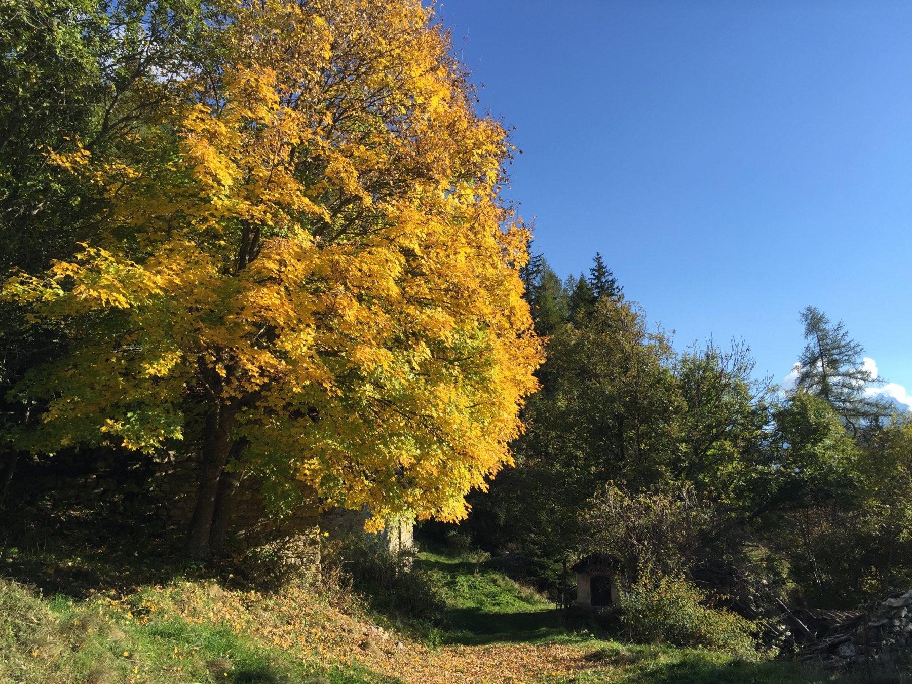 Mèanaz (Alpe) da Roisan, giro 2015-10-10