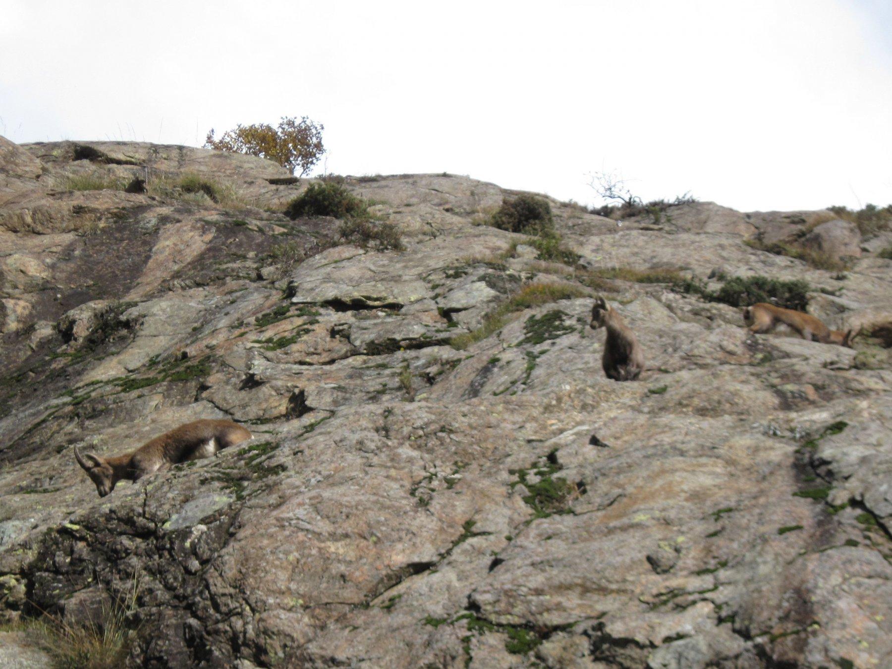 local climbers