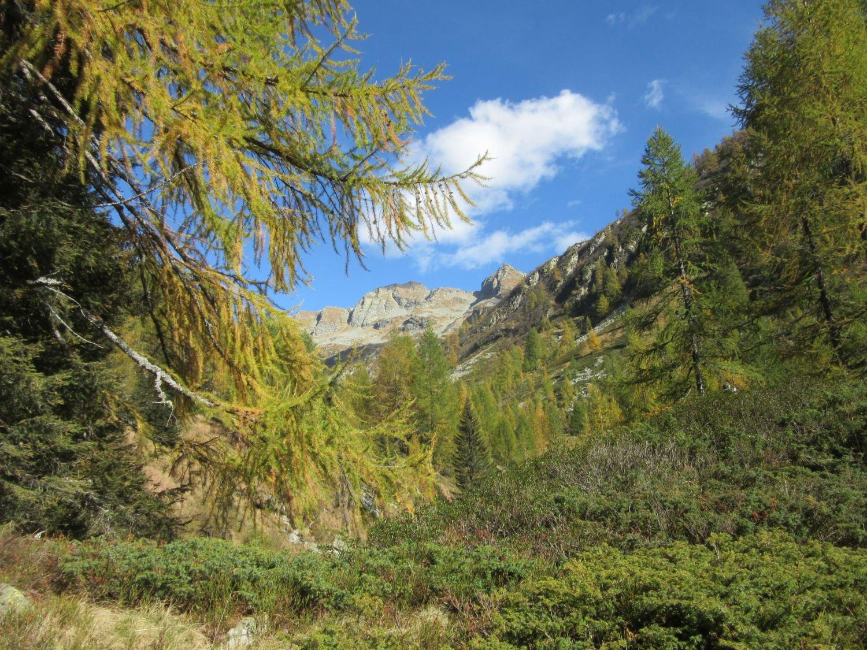 Bonasson Primo (Rifugio) da Agarina 2015-10-11