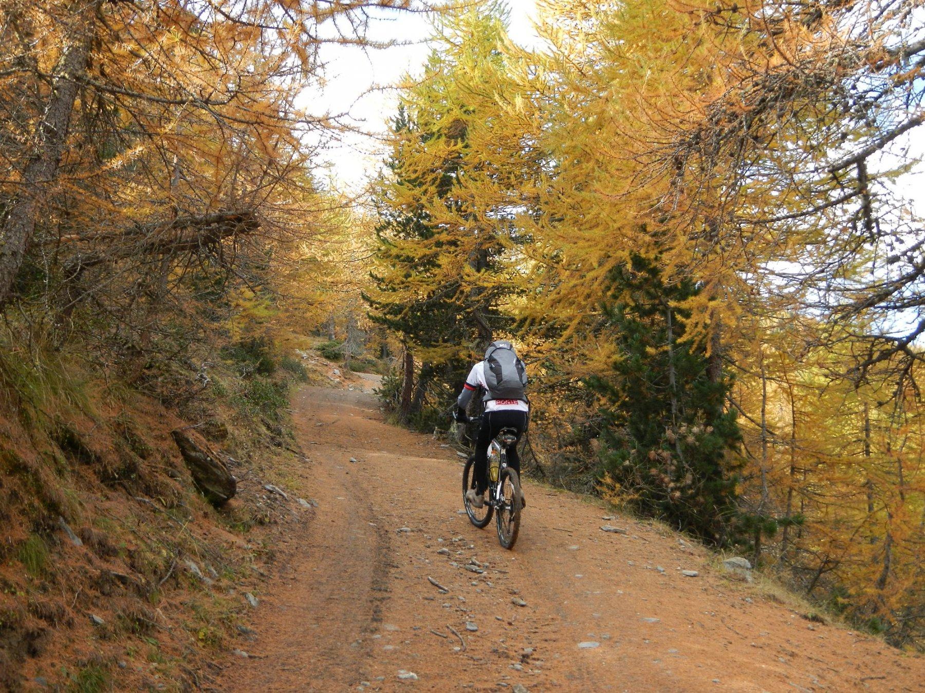 oltre l'Alpe d'Arguel