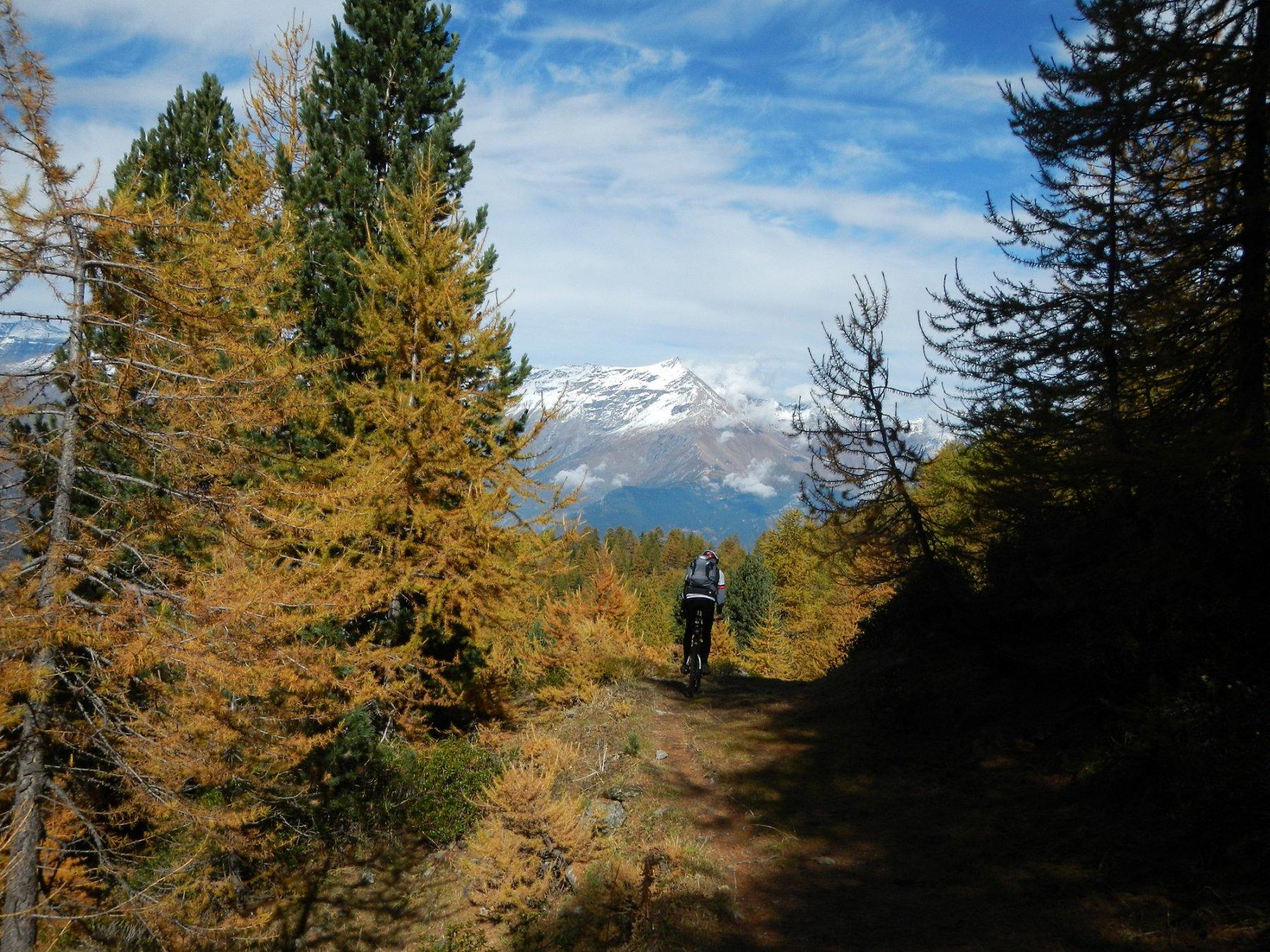 il successivo bel tratto di bosco su mulattiera e sentiero