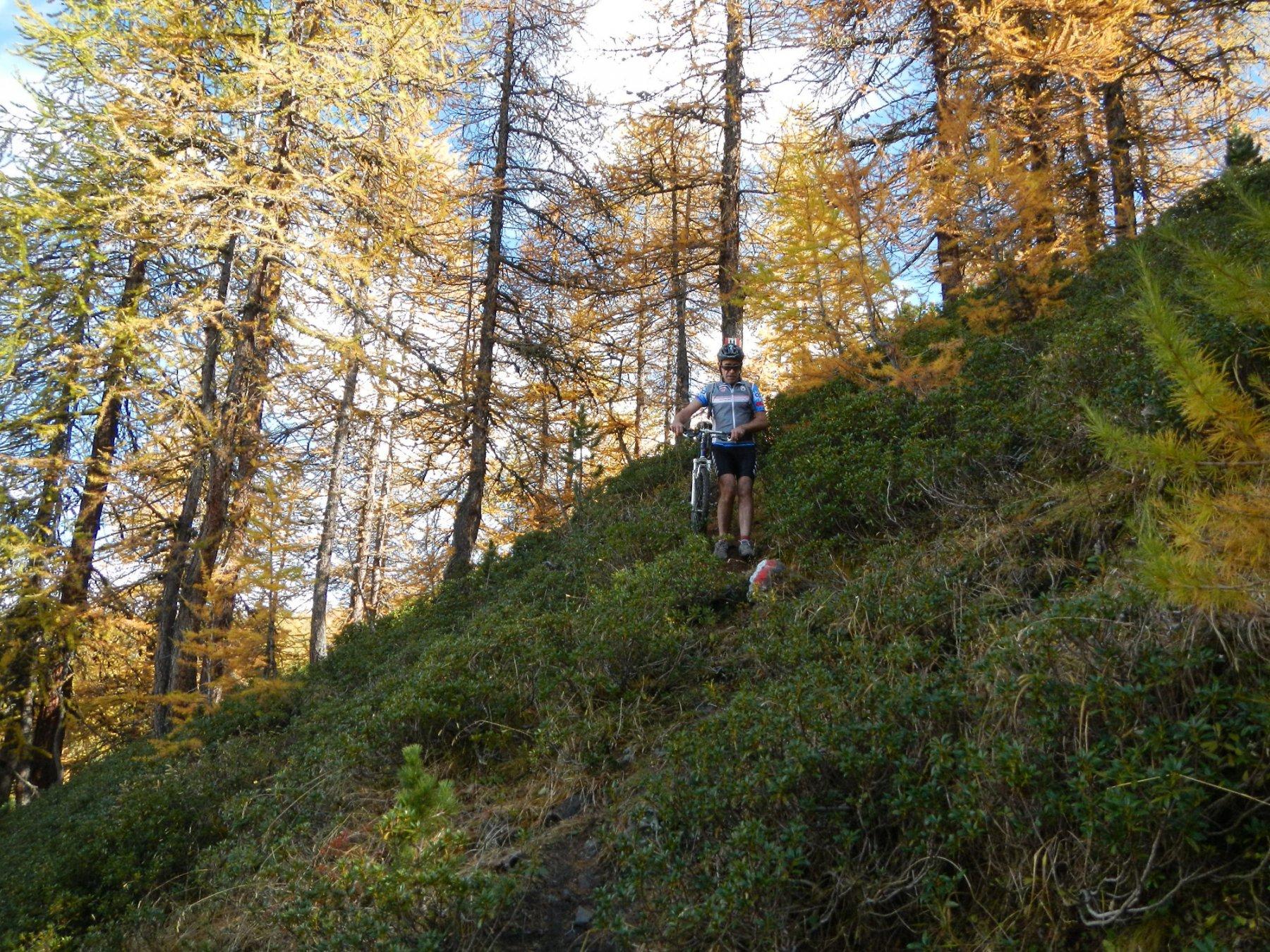 il tratto di bosco non ciclabile