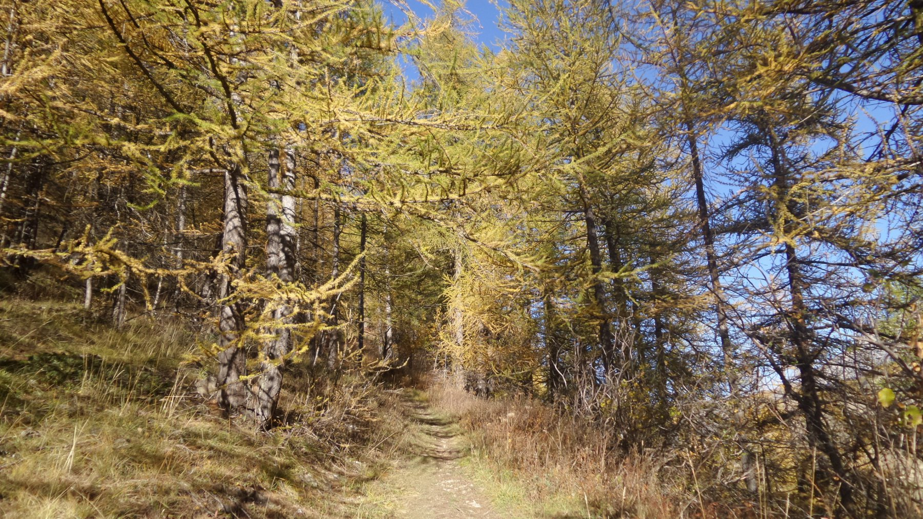 il sentiero che sale nel bosco del Vallon des Vaches (17-10-2015)
