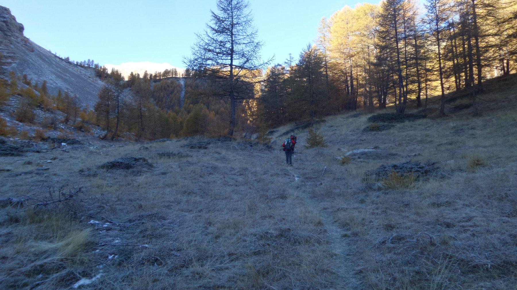 terminato il bosco si entra nel Vallon des Vaches (17-10-2015)