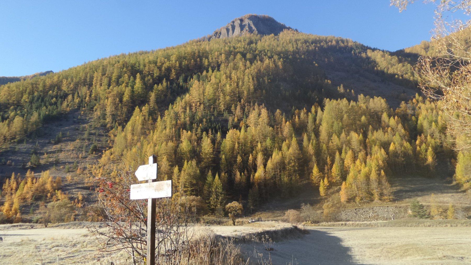 il bosco iniziale del Vallon des Vaches da risalire (17-10-2015)