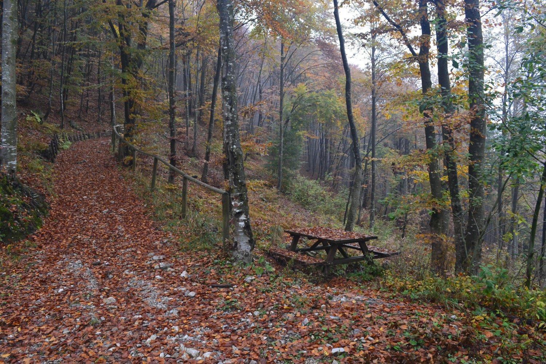 la strada nel bosco che riporta a Pianca