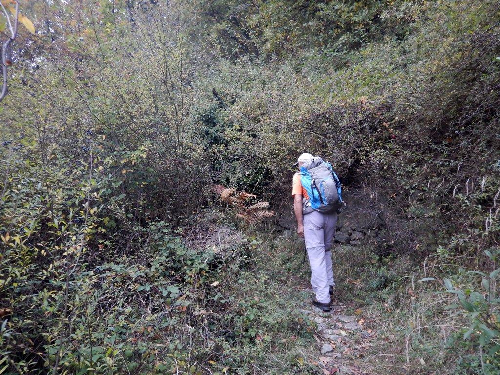 I rovi assediano il sentiero