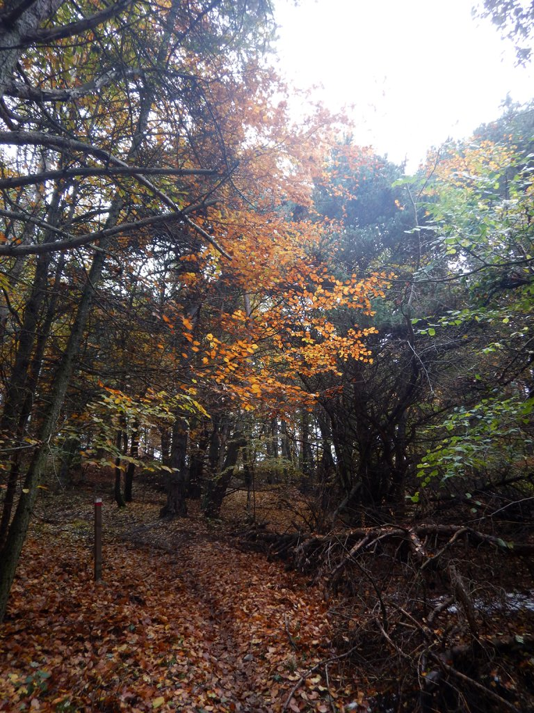 Bei colori nel bosco
