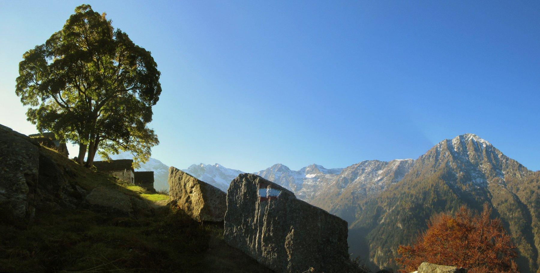 Alpe Camino m. 1438