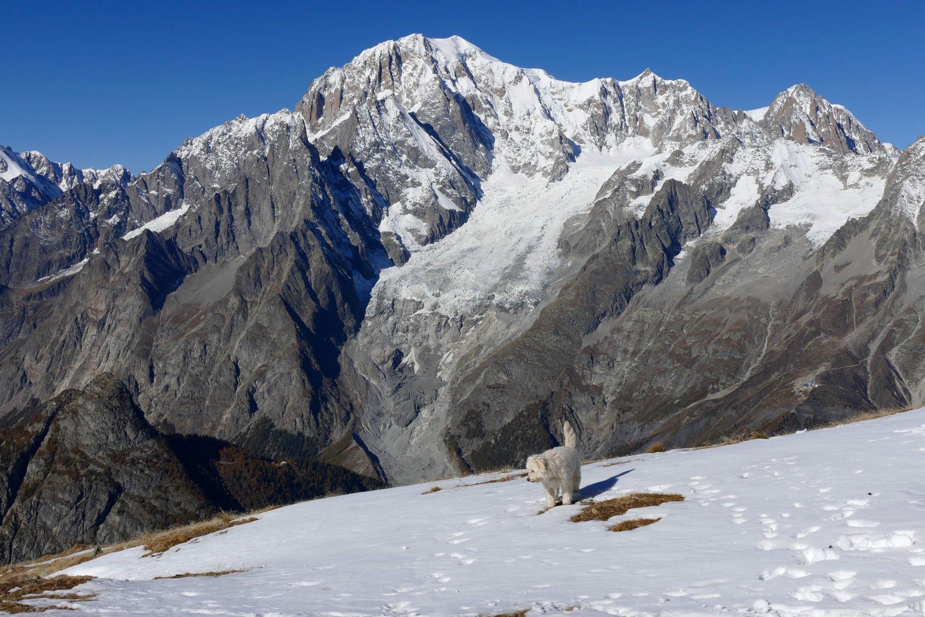 Buck sullo sfondo il Monte Bianco (23-10-15)