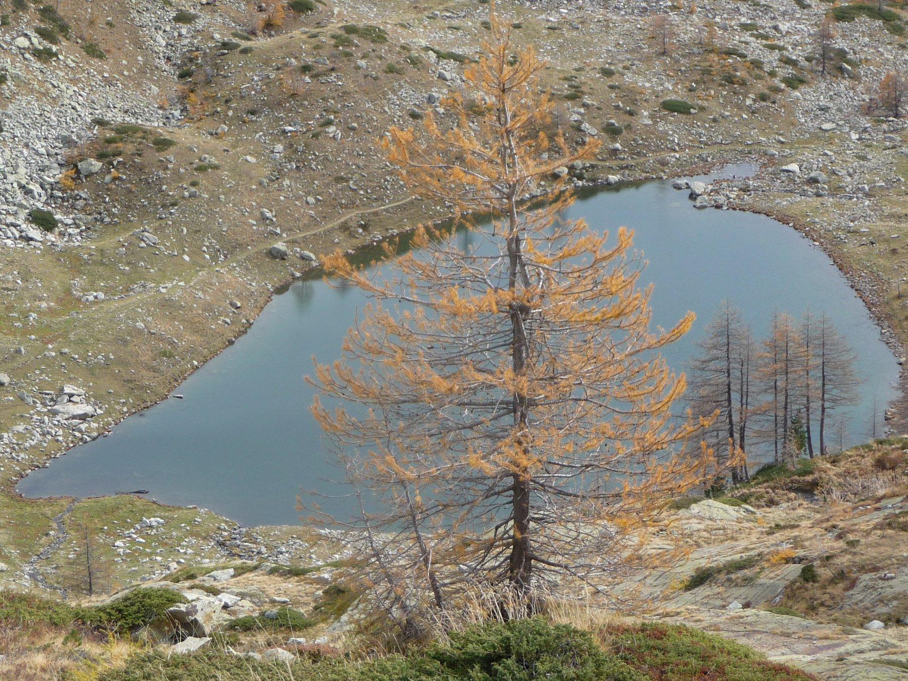 l'oro dei larici al lago sottano