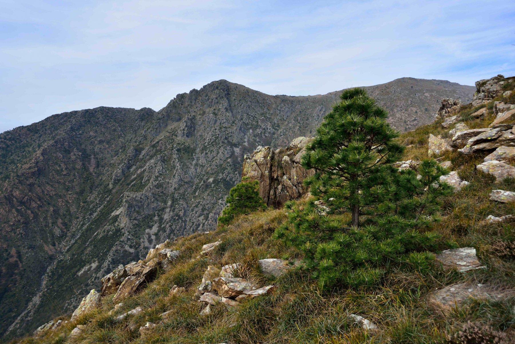 La Punta Martin e la cresta di salita visti dal sentiero di discesa verso la Baiarda.
