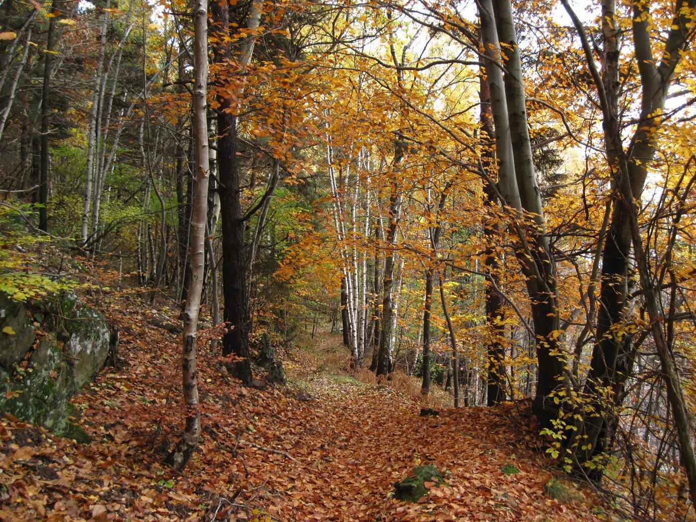 Splendidi colori autunnali nel bosco