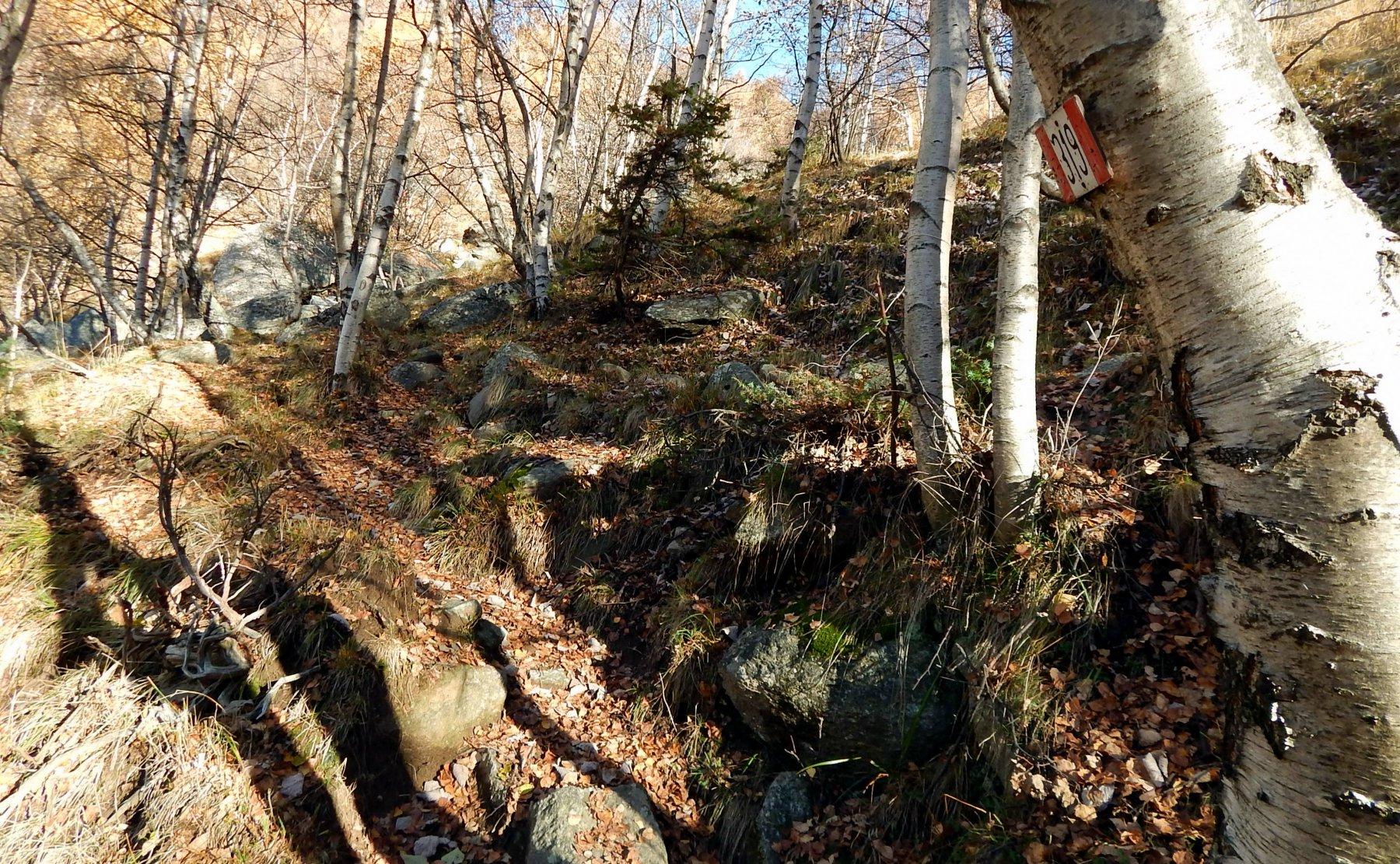 Parte finale del bosco