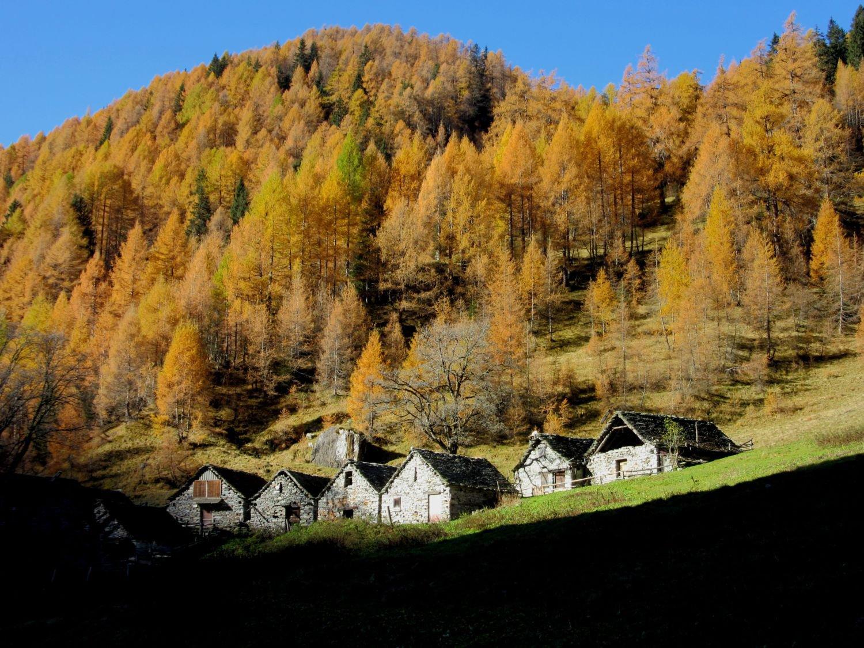 Colori all'Alpe Nocca