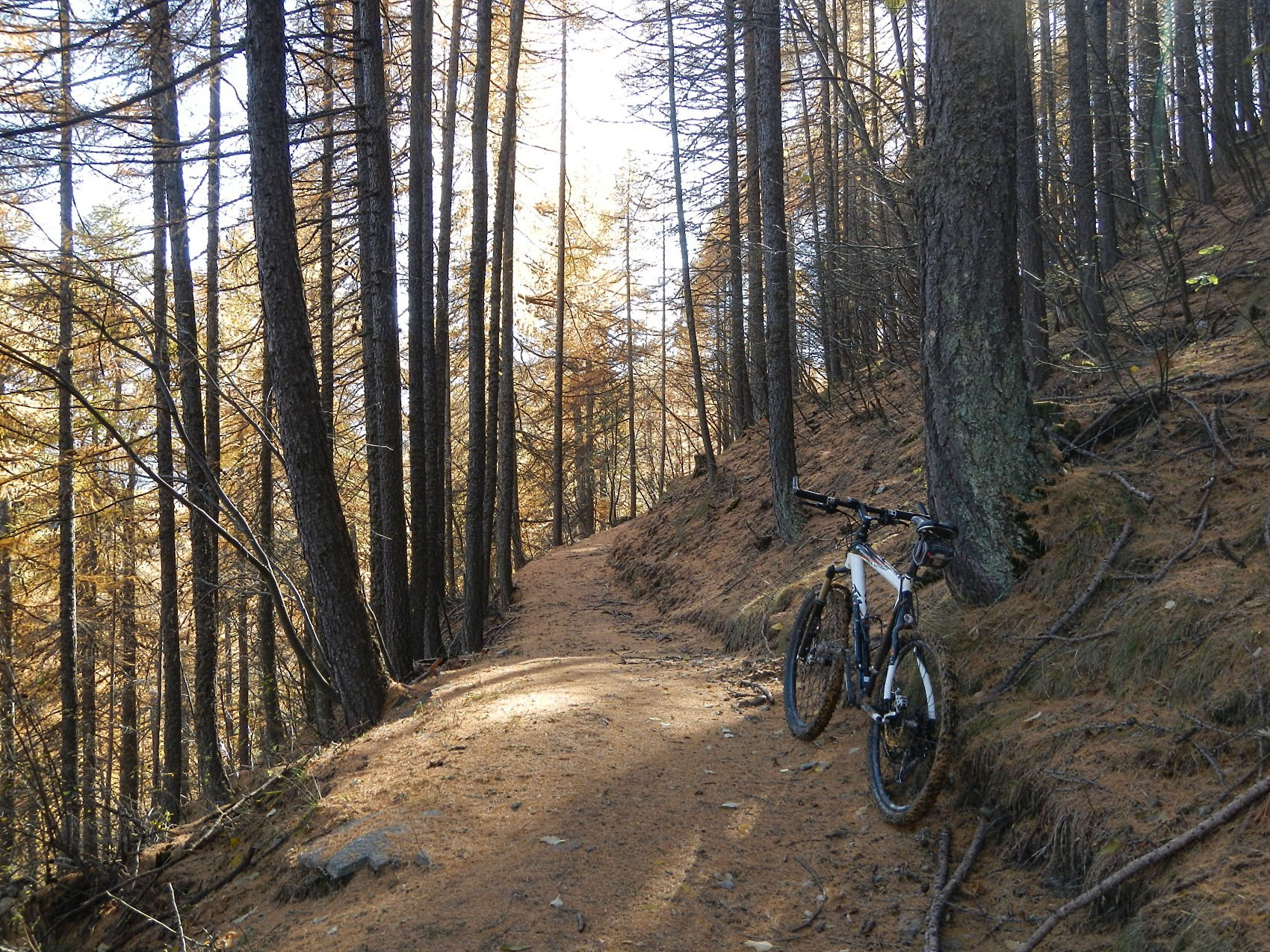 il bel bosco del Monte Pessiol