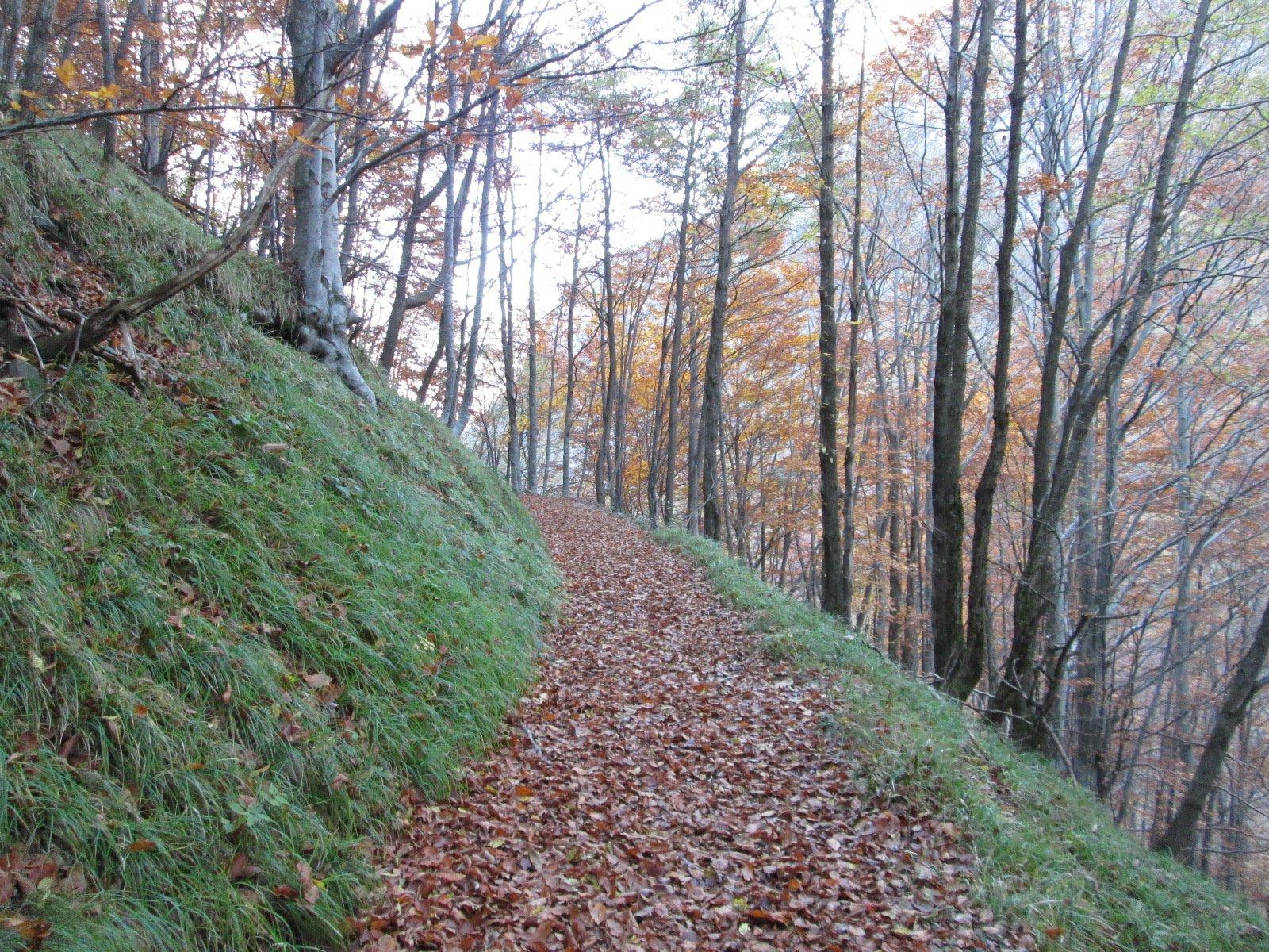 ultimo tratto di sentiero lungo il torrente