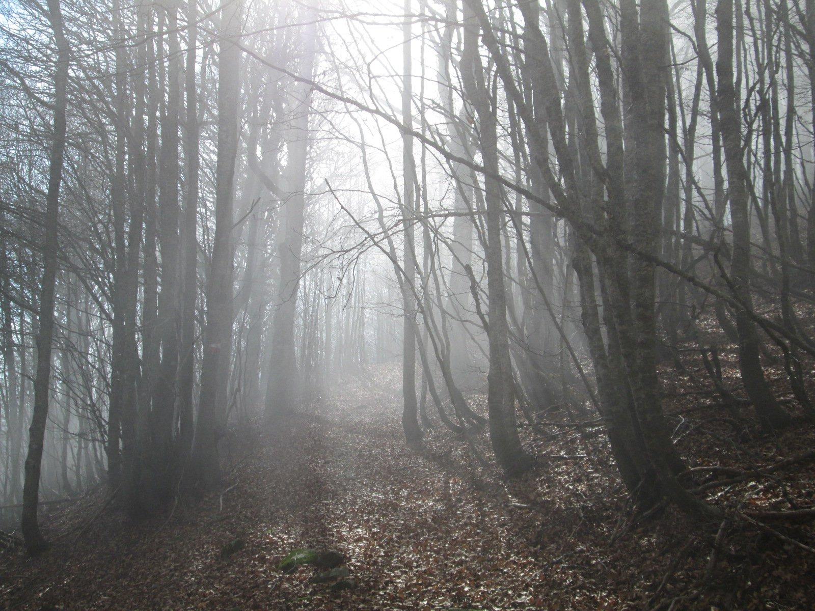 luci suggestive nel bosco