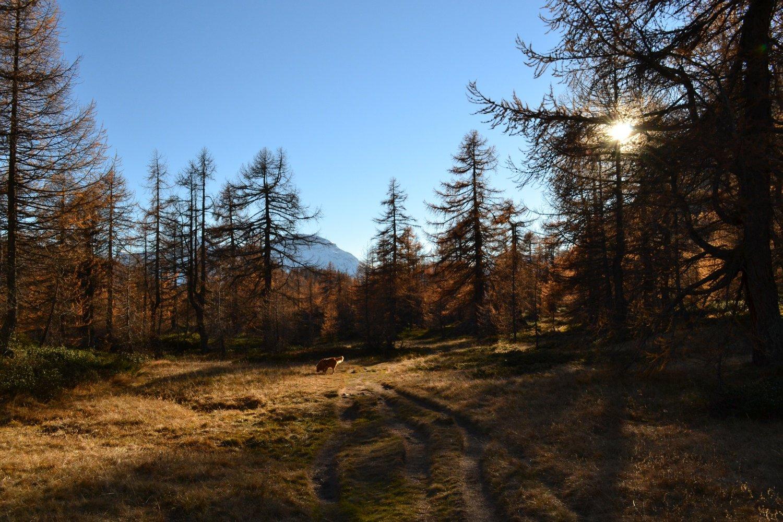 radura nei pressi dell'Alpe Codelago