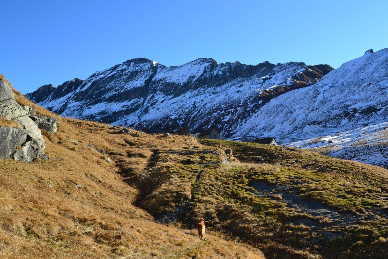 in vista dell'Alpe Pojala