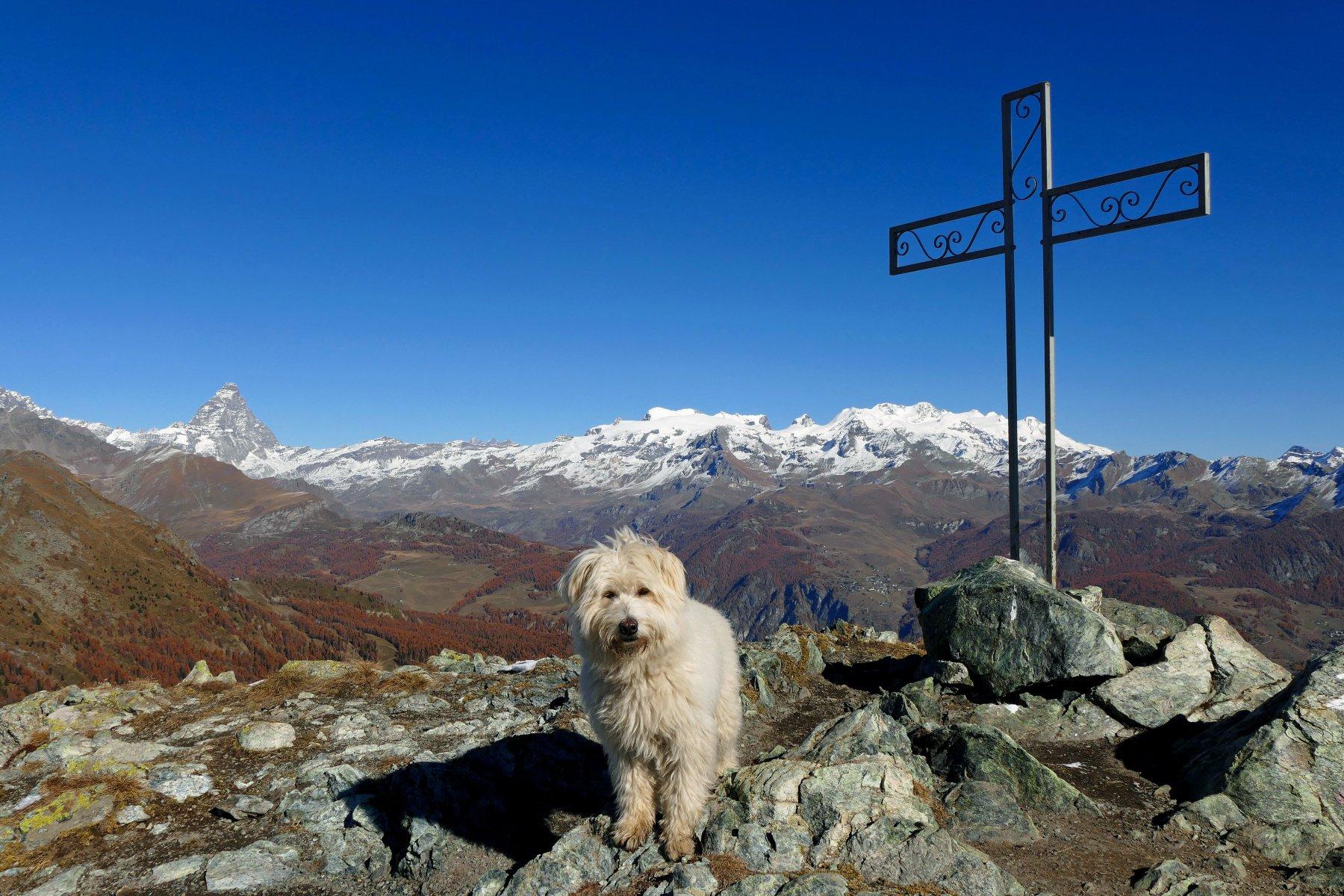 Buck sulla cima,dietro il Cervino e il Rosa (02-11-15)